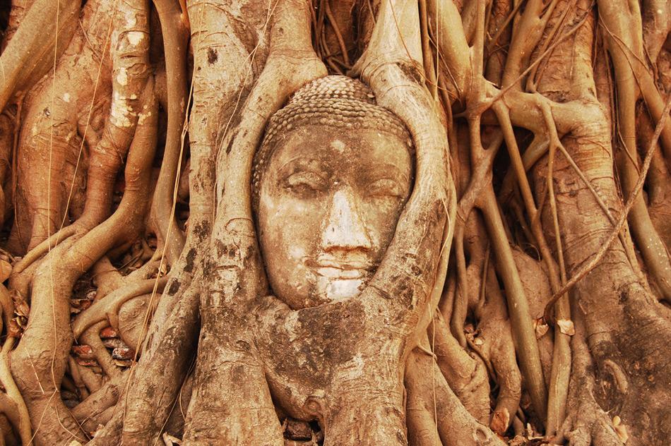 Голова Будды в дереве - древний город Аюттайя, Таиланд