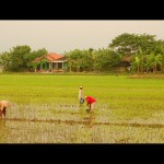 Рисовые поля на острове Ява Индонезия