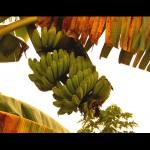 Тропическая природа острова Ява Индонезия