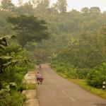 Сочная природа южной части острова Ява