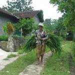 Проезжаем второстепенными дорогами через деревни к южному берегу острова Ява