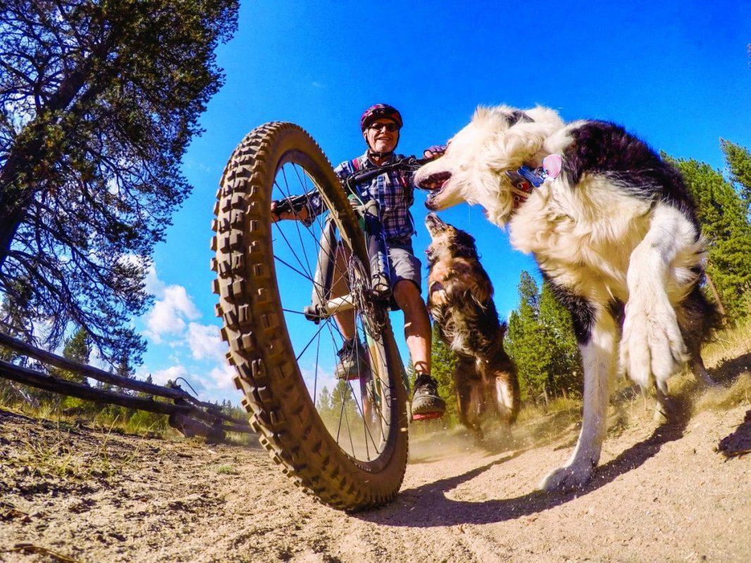 Собаки и велосипед